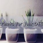 15 Plants For Your Office Desk or Business That Will Look Amazing