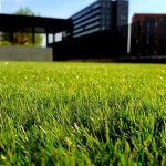 Top 5 Lawn Grass Seeds Suitable For Yard and Business Purposes