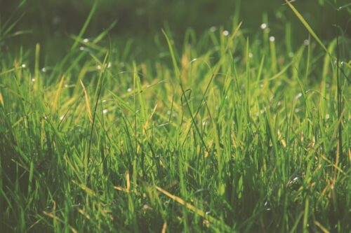 What Makes The Green Grass Grow on Your Lawn