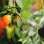 Top 8 Summer Vegetables You Can Grow During The Heat