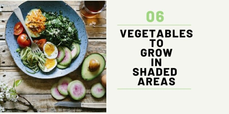 Top 6 Vegetables To Grow in Shaded Areas With Little To No Sunlight