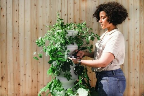 5 Simple Steps to Get More Fruits and Vegetables From Your Garden with methods that are easy to follow and achieve.
