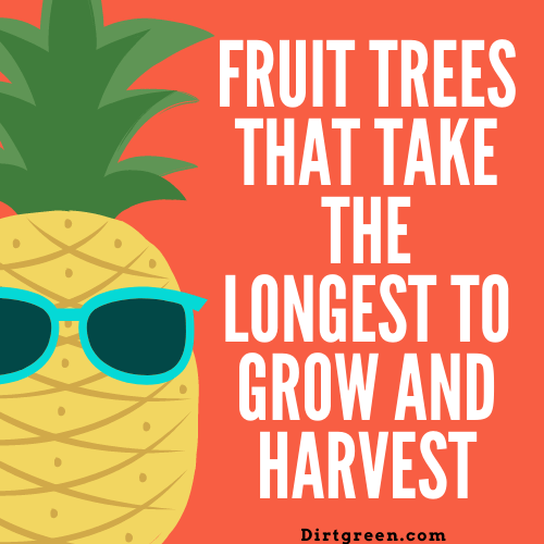 Fruit Trees That Take The Longest To Grow And Harvest