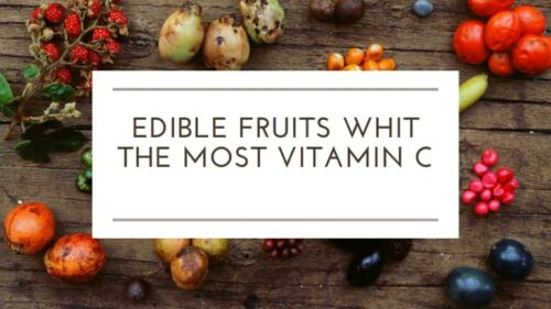 Top Edible fruits That Have The Most Vitamin C Within Them