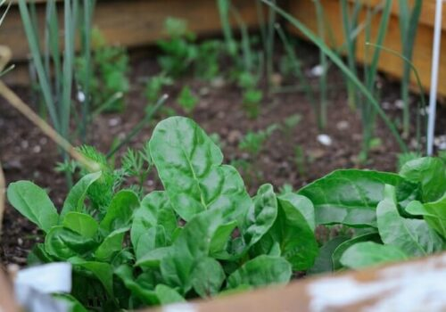 Top 10 Vegetables That Can Grow Throughout The Year