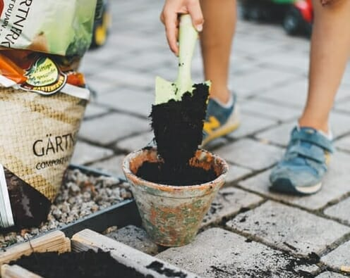 Absolute Guide For A Beginner in Gardening – Here's How To Start
