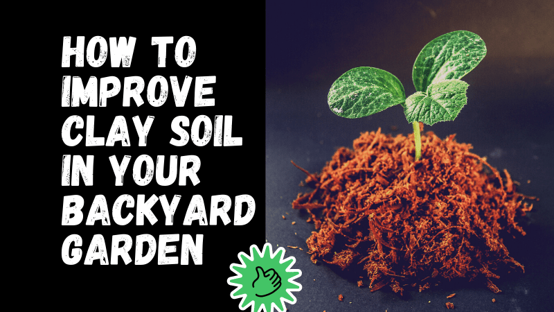 How To Improve Clay Soil In Your Backyard Garden?
