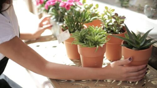 Do Potted Plants Need Their Soil Changed Periodically?