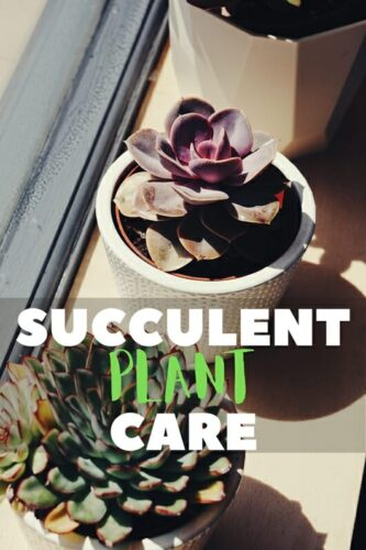 How To Know When A Succulent Plant Is Overwatered?