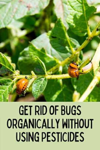 Get Rid of Bugs Organically Without Using Pesticides