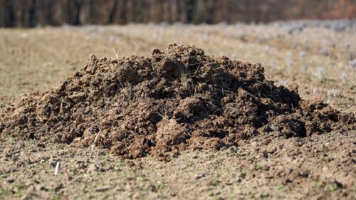 Here are Tips On How To Make Compost Manure At Home