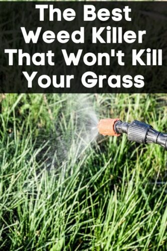The Best Weed Killer That Won't Kill Your Grass